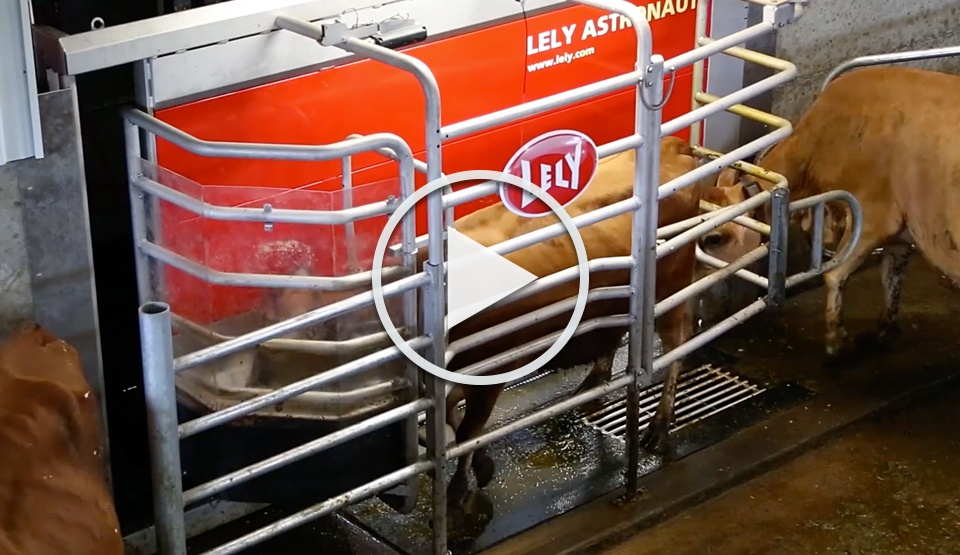 See how automation improves cow health and comfort